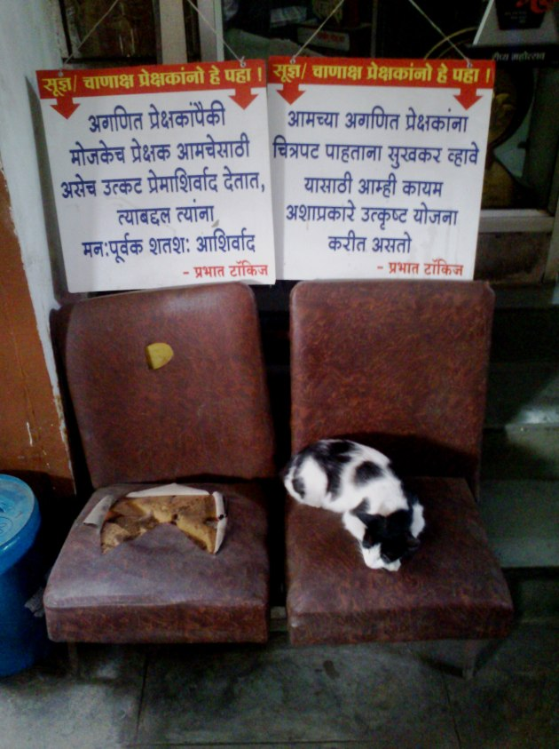 Puneri Paati - Humour at its best! Look at the clever cat!